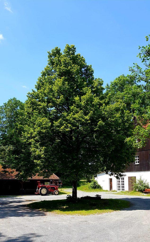 Linde_Tauritzmühle_1